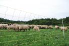 siatka-dla-owiec-horinetz-super-dl-50m-wys-105cm