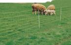 siatka-dla-owiec-dl-50m-wys-90cm