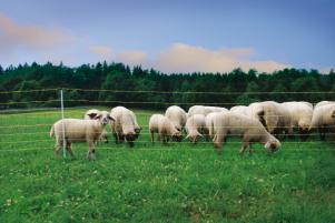 siatka-dla-owiec-horinetz-super-dl-50m-wys-105cm-i