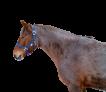 kantar-nylonowy-niebieski-pony1