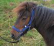 kantar-nylonowy-shetland-niebieski