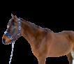 kantar-z-miekka-wysciolka-trzy-razy-regulowany-pony-niebieski