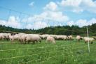 siatka-dla-owiec-palik-z-pojedynczym-gwozdziem-dl-50m-wys-90cm.3