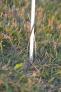 palik-z-wlokna-150-cm.1