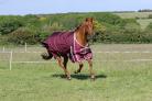 derka-dla-konia-fence-buster-ze-zdejmowanym-przykryciem-szyi-i-podszewka.2